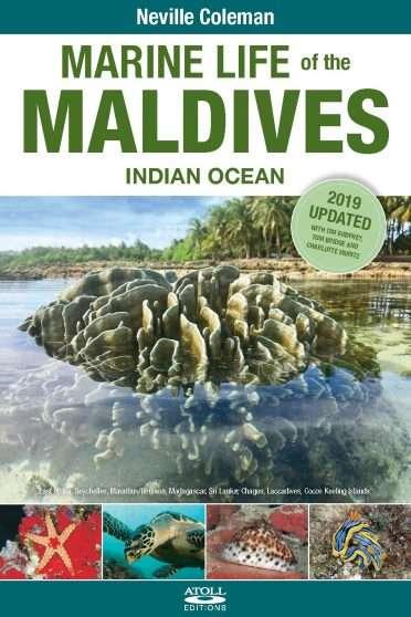 Marine-Life-Maldives